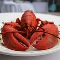 Insectes, crustacés, poissons… avant d'arriver dans nos assiettes, ces animaux souffrent-ils ?