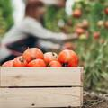 La cueillette, la solution pour des fruits et légumes ultra-frais et moins chers