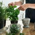 Comment réussir à garder des plantes aromatiques dans sa cuisine ?