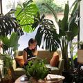 Les plantes préférées des fans de déco