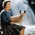 Royal corgis : plongée dans la grande vie des chiens adorés d'Elizabeth II