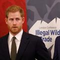 Au-delà des tensions, l'indéfectible fraternité : le prince William et Harry ont repris contact (sur Zoom)