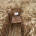 Jacquemus défile dans les blés et invite au pique-nique bucolique