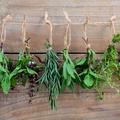 Pour l'immunité, contre la fatigue ou en cuisine, le retour en grâce des herbes