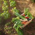 Remportez votre panier bio cultivé avec amour près de chez vous