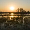 De Beers s'associe avec National Geographic pour protéger les espèces menacées d'Afrique