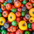 Est-il encore possible de manger des tomates qui ont du goût ?