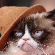 Grumpy Cat, le chat grincheux, est mort