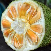 Jacquier, le fruit riche en protéines qui affole les vegans
