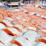 Faut-il continuer à consommer du saumon?