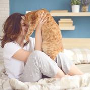 Chats, chiens, chevaux : comment les animaux vous aident contre le stress