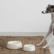 Panier, gamelle, jouets... Enfin des objets design pour nos animaux de compagnie