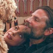 Le prix PETA sera-t-il la seule récompense de Bradley Cooper pour