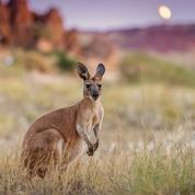 Versace n'utilisera plus la peau de kangourou pour fabriquer ses pièces en cuir