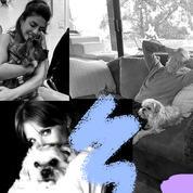 Jennifer Aniston, Zoë Kravitz, Jessica Chastain : confinées, les célébrités câlinent leur chat, chien... ou poney
