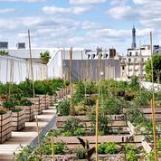 Ces femmes qui construisent des fermes high-tech sur les toits des villes