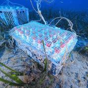 Caves sous-marines : le grand plongeon des producteurs d'huile et des vignerons