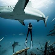 Madison Stewart, la plongeuse qui danse avec les requins