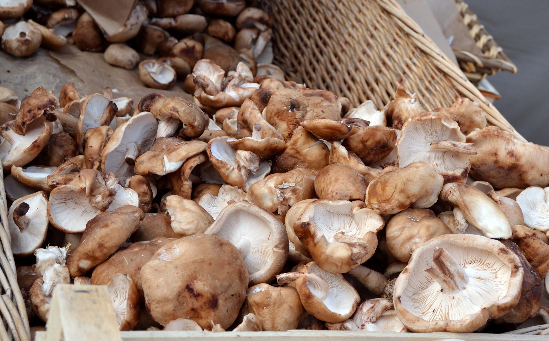Recetas de hongos shiitake - Kitchen / Madame Figaro