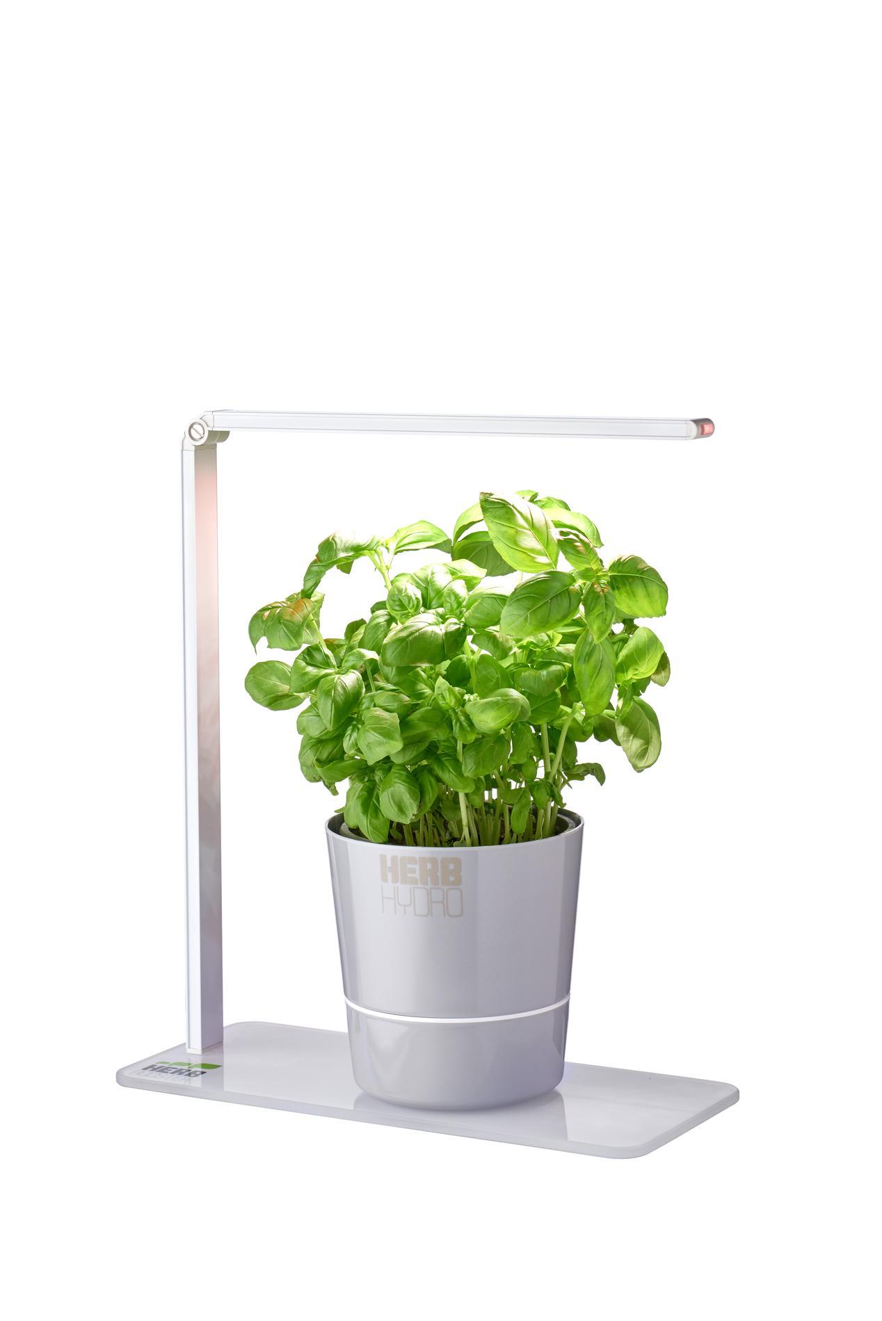 Herbes Aromatiques D Intérieur comment réussir à garder ses plantes aromatiques dans sa
