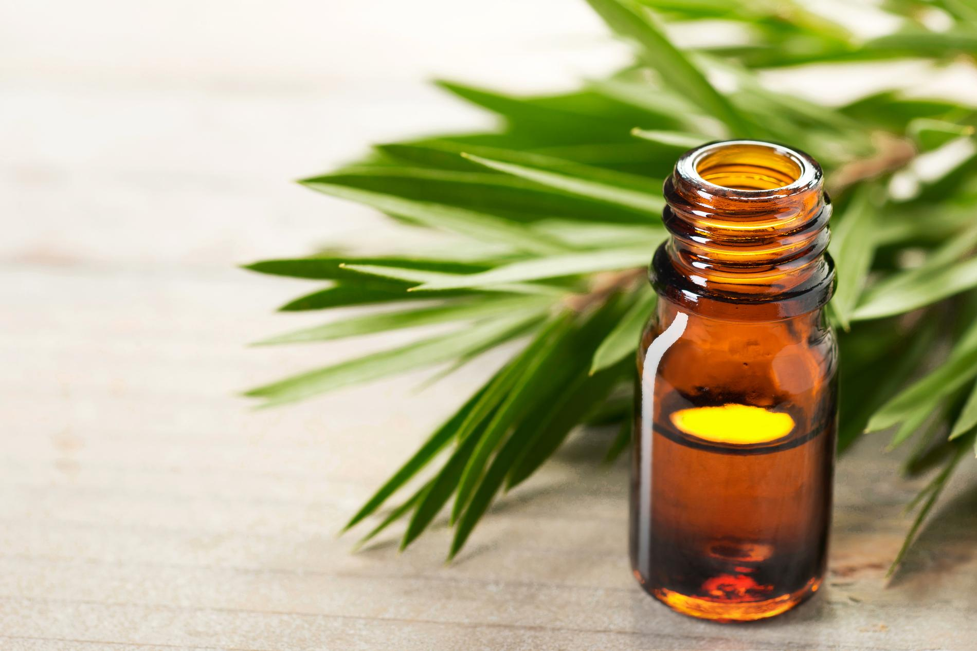 Acne, oily skin, cold sore ... How to use tea tree essential oil - Madame Figaro