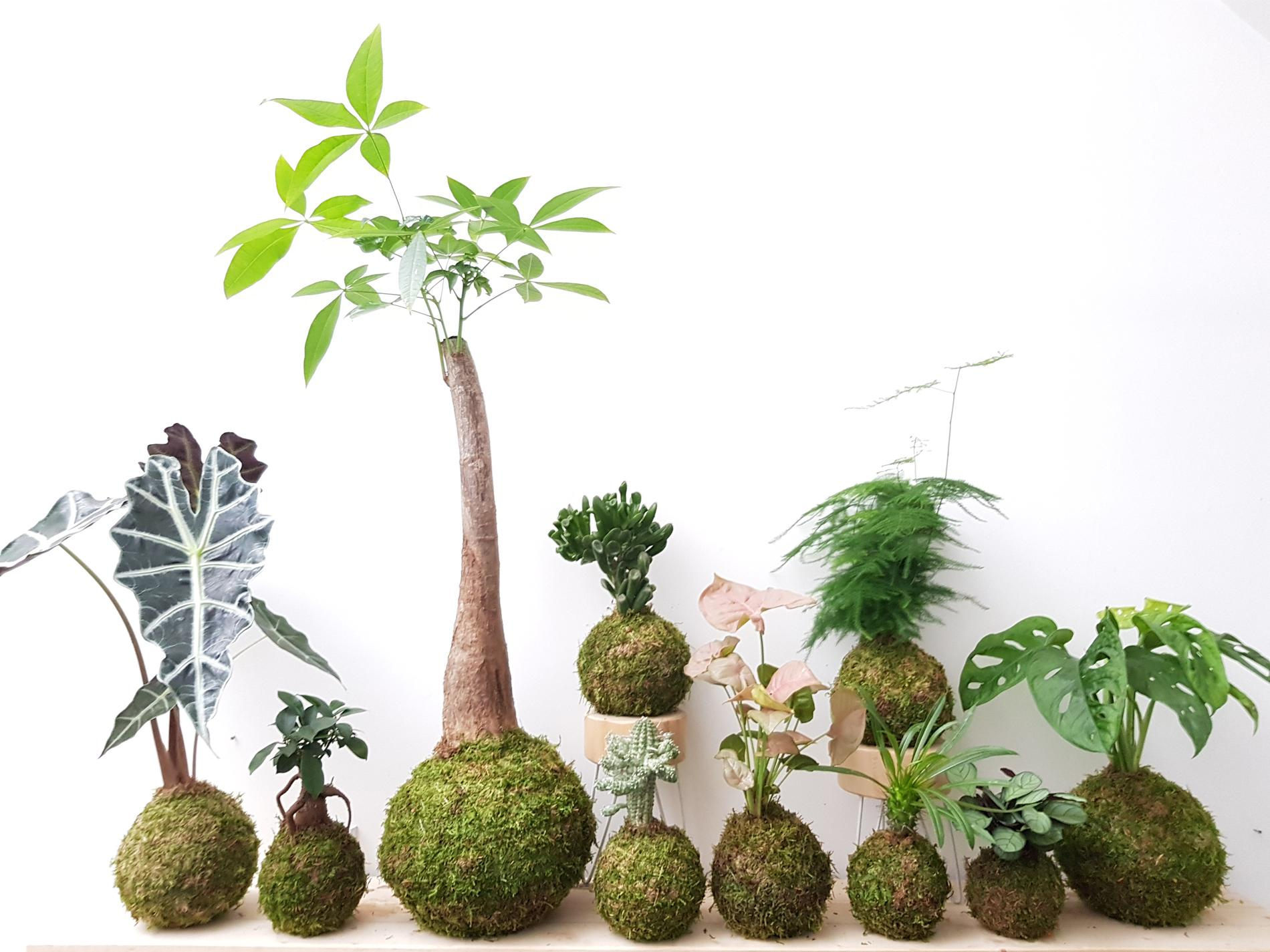 Plante D Intérieur A Faire Pousser bien choisir ses plantes d'intérieur quand on n'a pas la