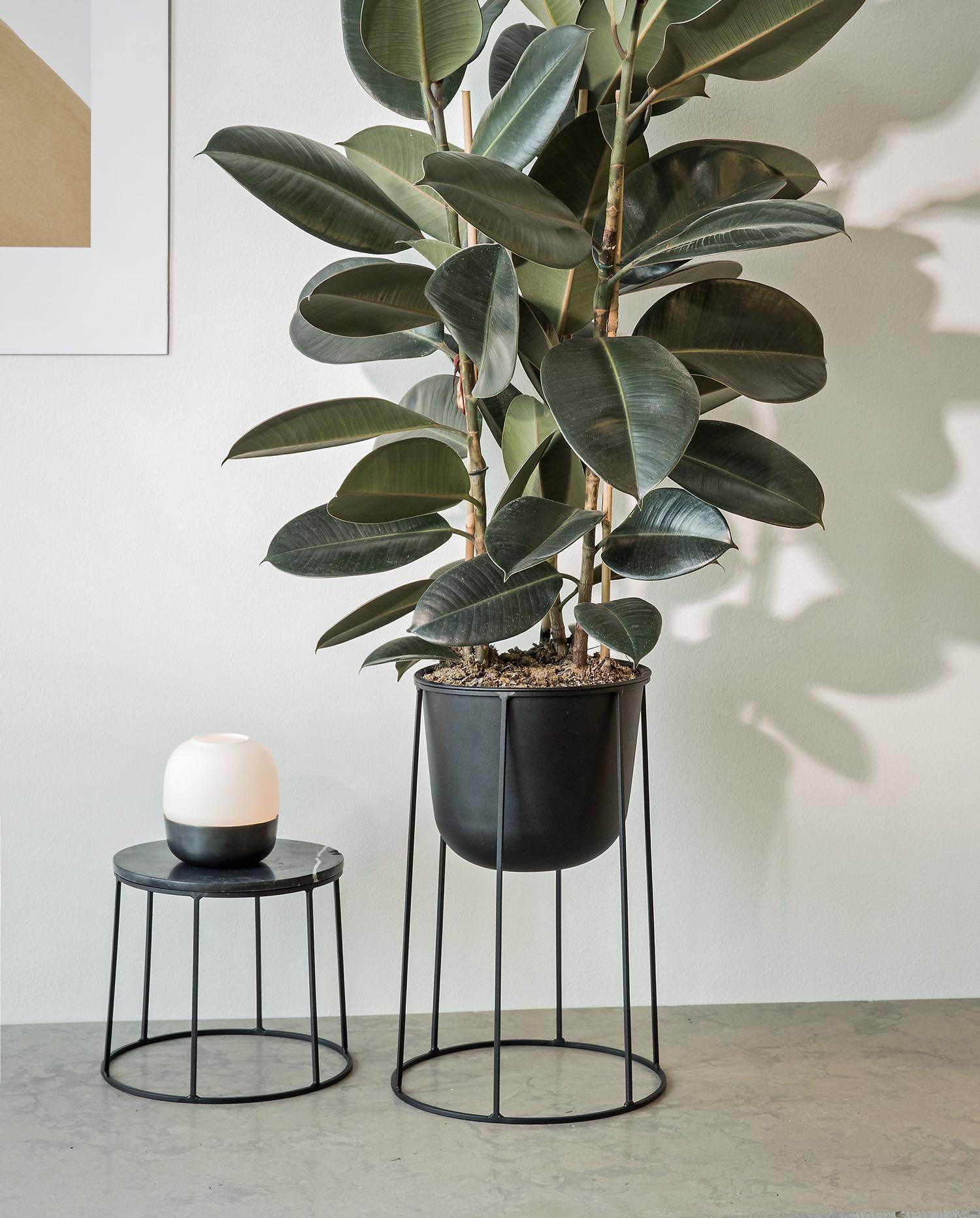 Pot De Plante Pas Cher cache-pots et suspensions design pour des plantes du sol au