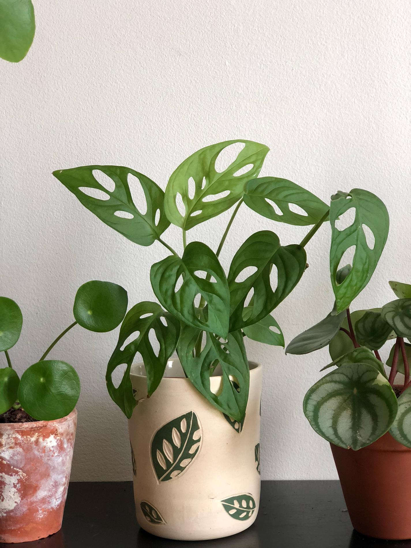 Plante D Intérieur Tendance les plantes préférées des fans de déco - madame figaro