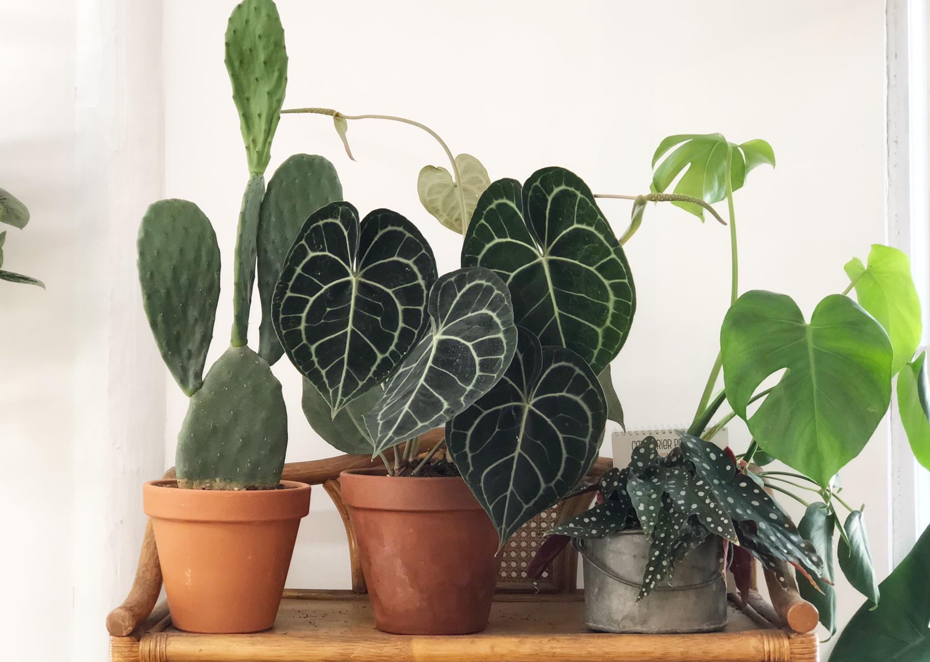 Quelle Plante Mettre Dans Un Grand Pot Exterieur les plantes préférées des fans de déco - madame figaro
