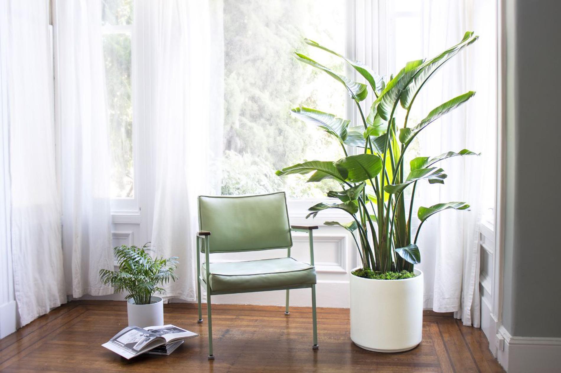 Suspension Pour Plantes D Intérieur les plantes préférées des fans de déco - madame figaro