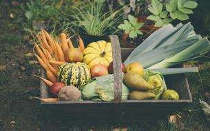 Fruits, légumes, fromages, poissons... Quels sont les produits de saison à savourer en automne?