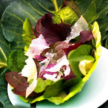 Méli-mélo de verdure