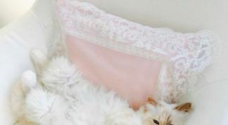 La chatte de Karl Lagerfeld lance sa ligne de maquillage