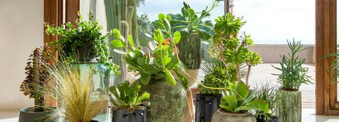 Cache-pots et suspensions design pour des plantes du sol au plafond