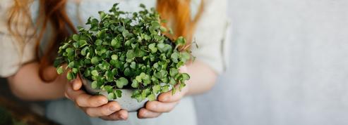 Comment cultiver salades et jeunes pousses dans sa cuisine ?