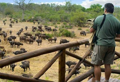Partir En Famille Safari Africain Geant Madame Figaro