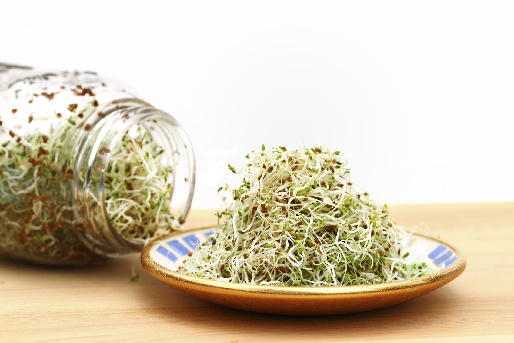 Comment Planter Les Graines De Persil graines germées maison : le mode d'emploi pour se lancer