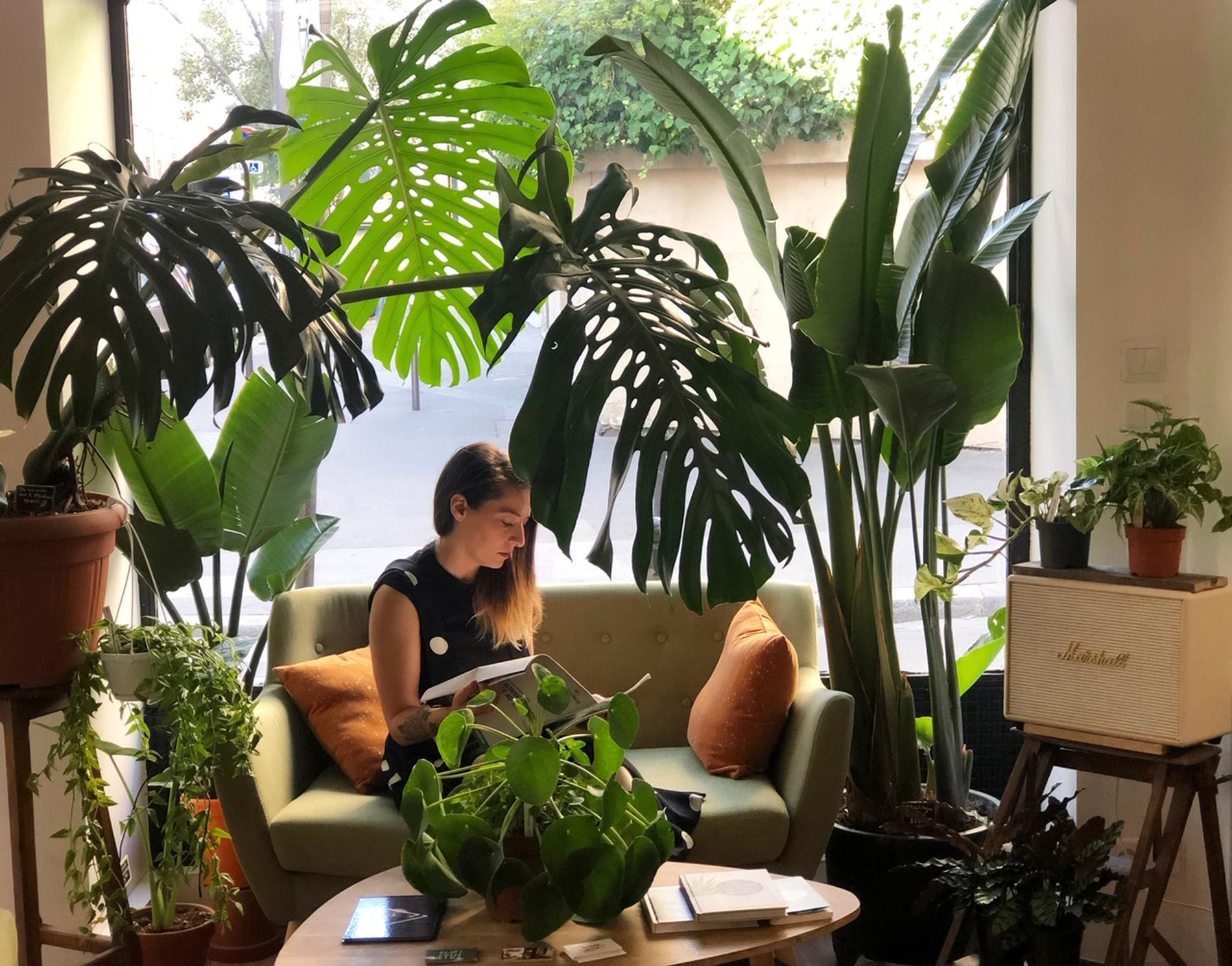 Etagere Pour Plantes Interieures les plantes préférées des fans de déco - madame figaro