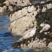 Instance de divorce entre les phoques et les pêcheurs