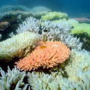 La seule maternité française des massifs coralliens