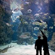 Découvrir la faune sous-marine sans se mouiller