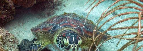St Vincent et les Grenadines, paradis des plongeurs