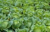 Agriculture raisonnée: un cadre officiel pour une production moins polluante