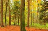 Forêts: la bonne santé d'une niche fiscale