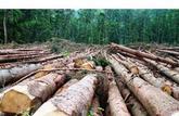 Décryptage: le papier veut-il la mort de l'arbre?