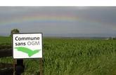 Bilan: dans nos assiettes et dans les champs, où sont les OGM?