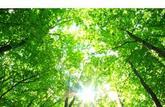 Acheter une forêt, un investissement sûr