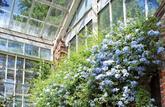 Rénover une verrière ancienne: Jardin d'hiver ou pièce toute saison
