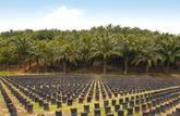 Le procès de l'huile de palme: une matière grasse décriée