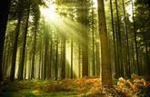 Marché: Un nouvel indice pour les forêts